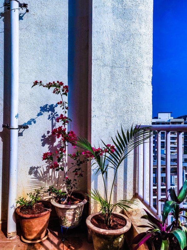 idee deco balcon plantes