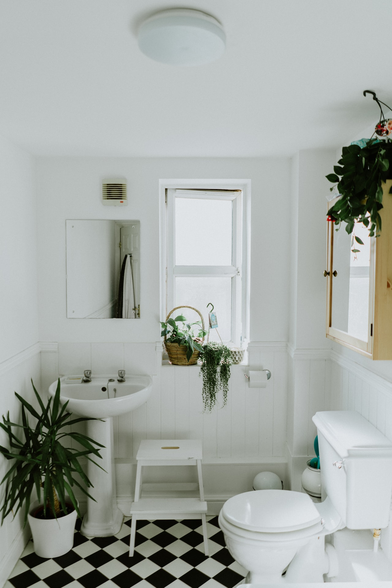 plante salle de bain wc