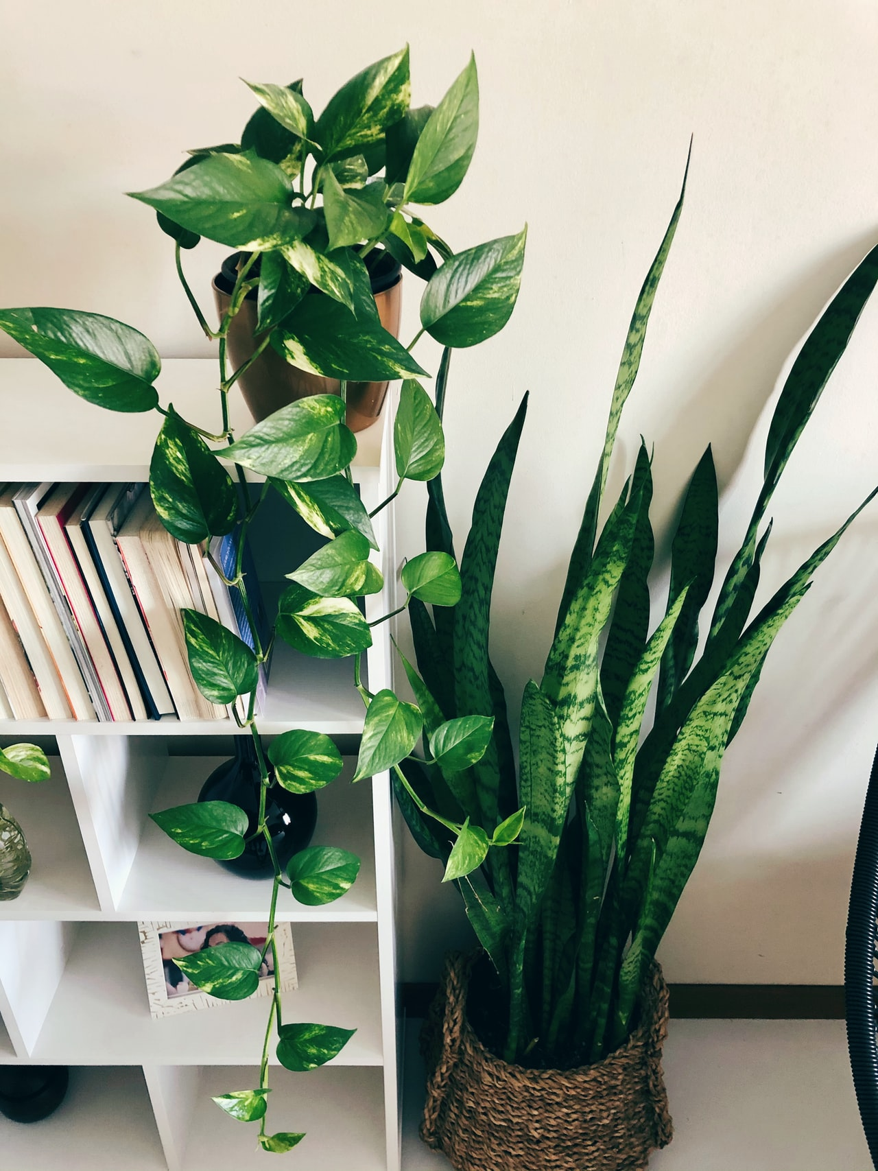 plante productivité