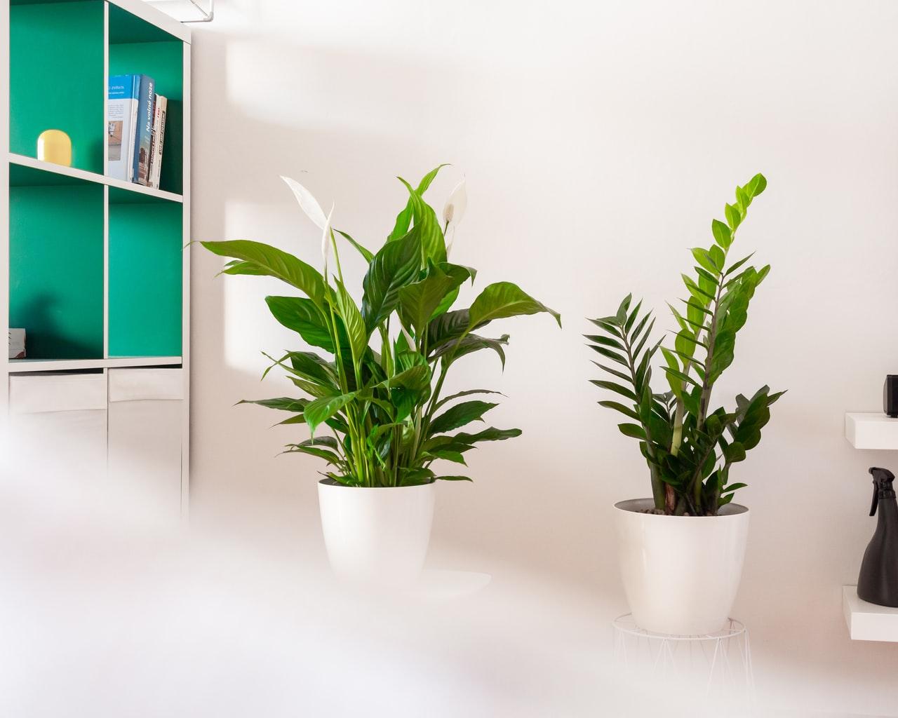 plante depolluante bureau